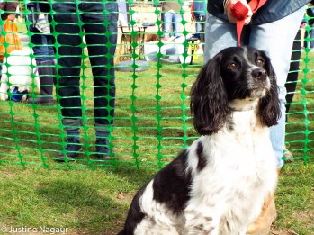 The Friends of Palewell Common's 2nd Dog Show